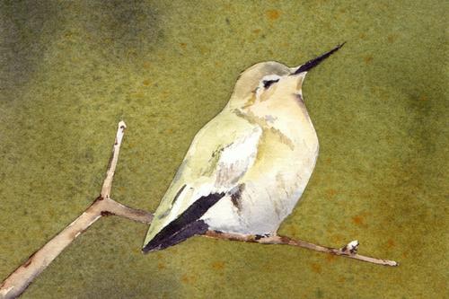 BirdArt_MCM_hummer.jpg