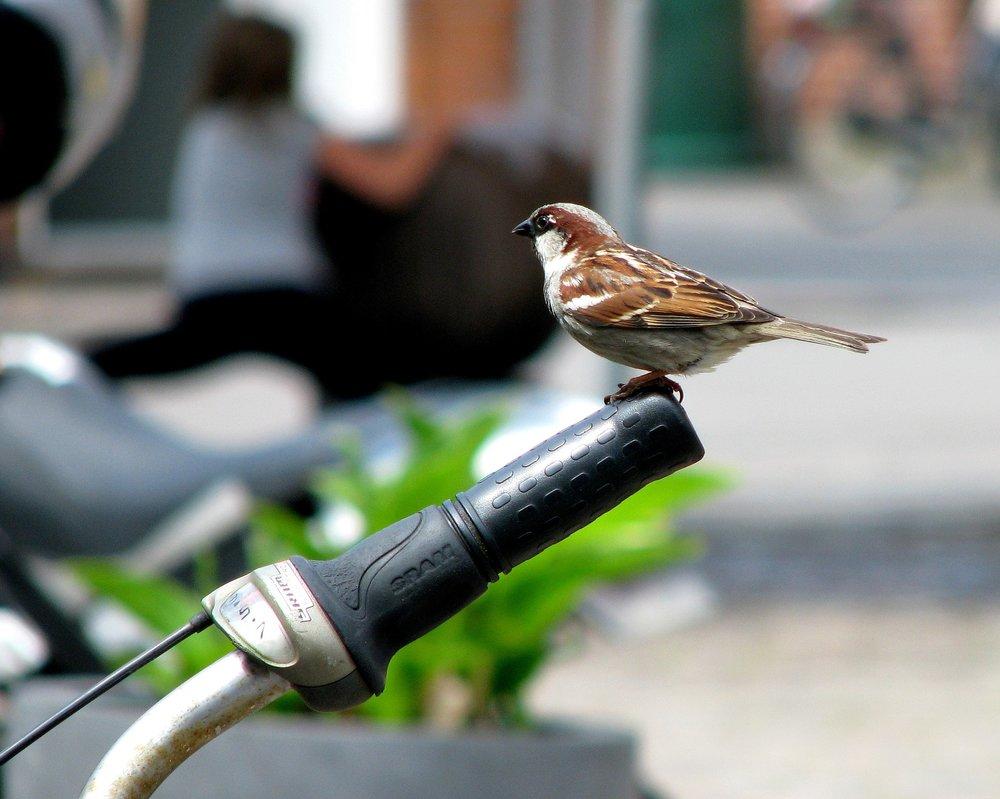 bird bike.jpg