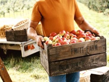 Forbidden Spirits apple picking crate man.jpg