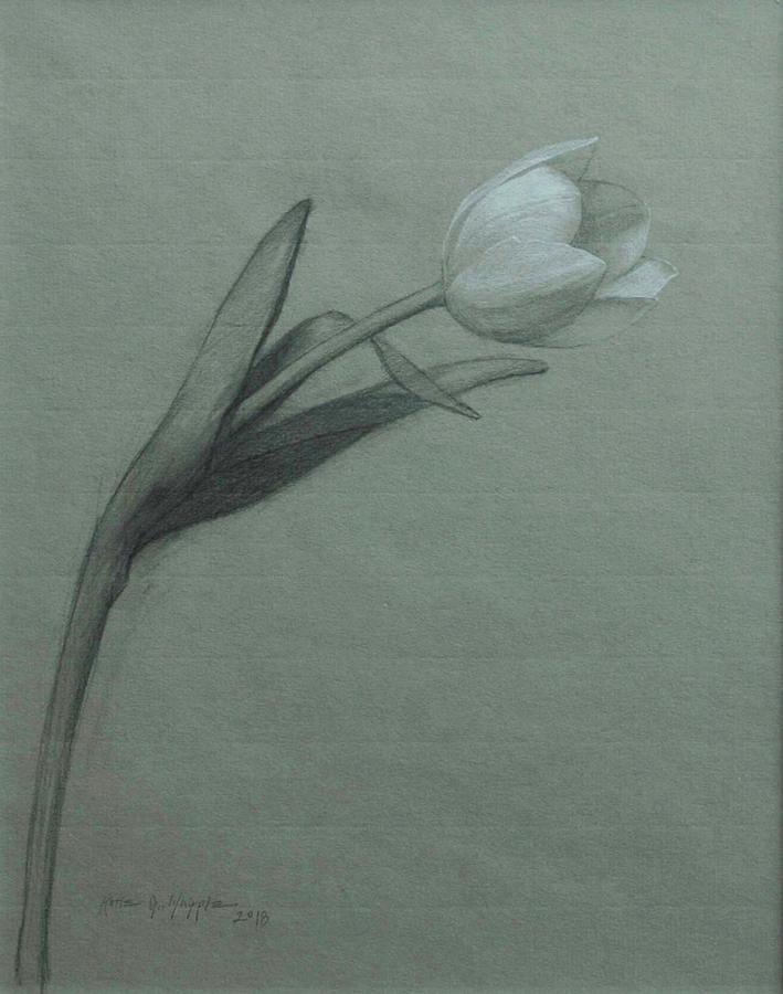 "Katie Whipple ""White Tulip"""