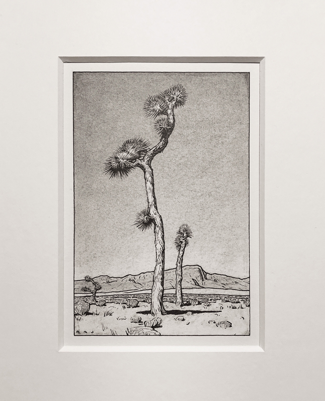 "(SOLD) ""Joshua Tree, Clark County NV"" 6""x4"" Pen & Charcoal"