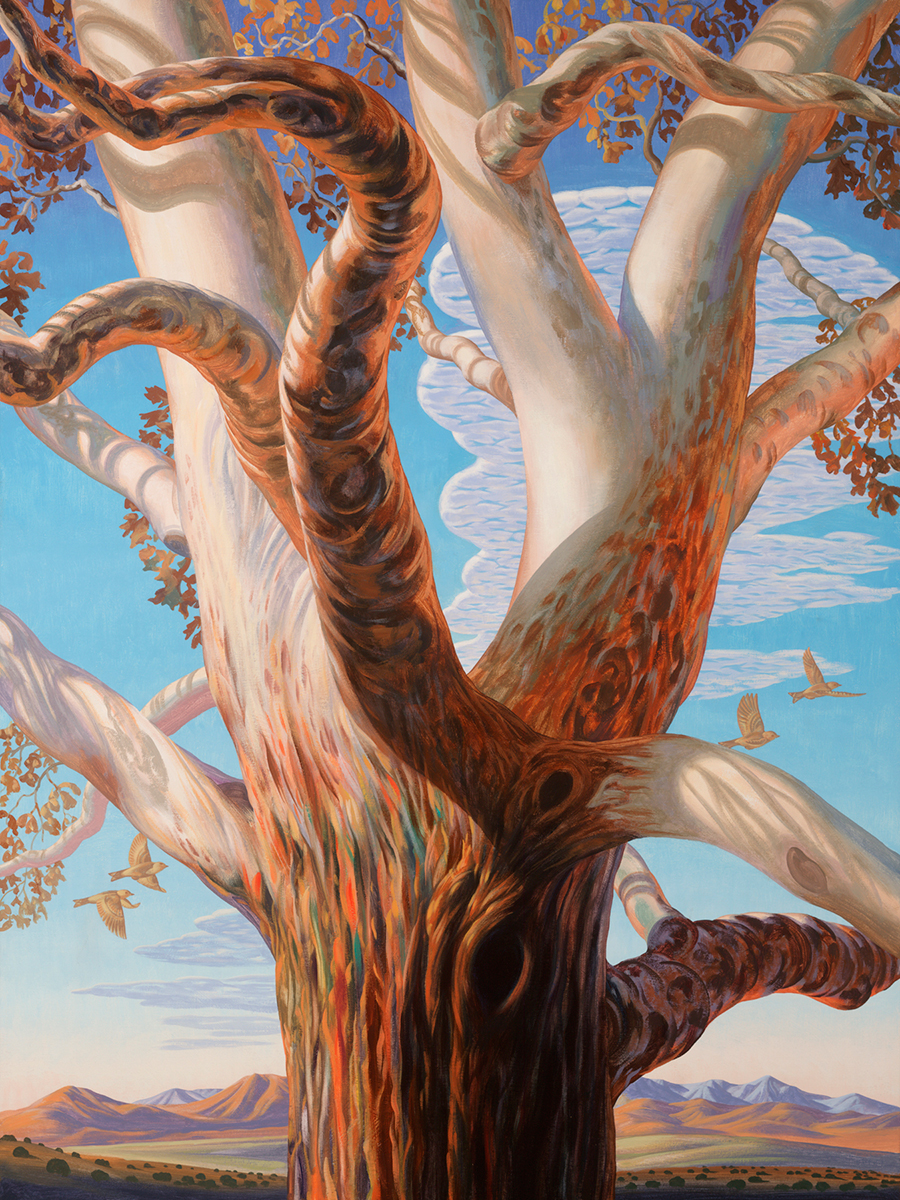 "Bryan Haynes ""Western Sycamorum"" 40""x30"" Oil"