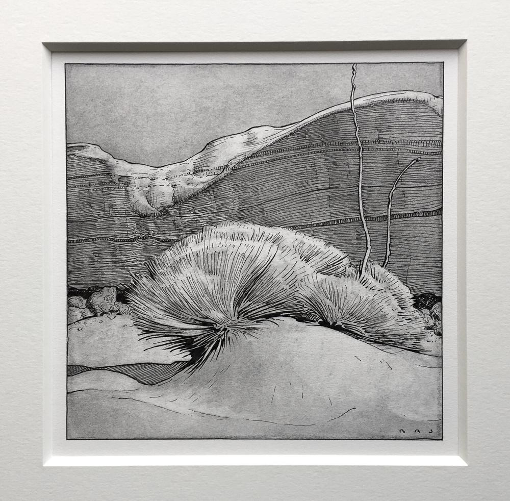 """(SOLD) Brett Allen Johnson """"A Desert Life"""" 7""""x7"""" Charcoal & Pen"""
