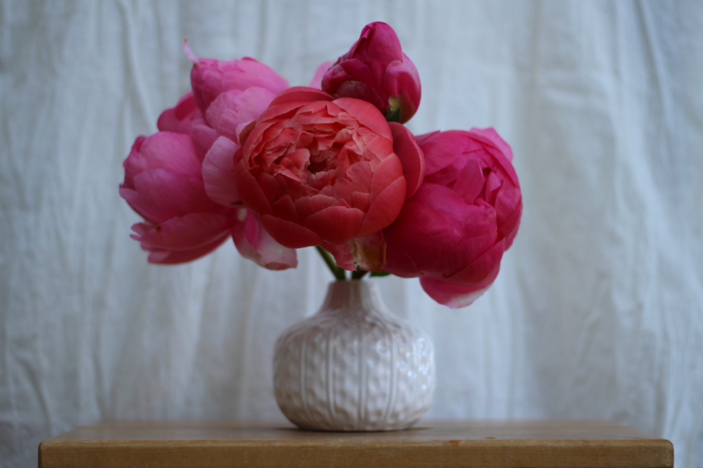 Shades of coral peonies you will surely fall in love with...