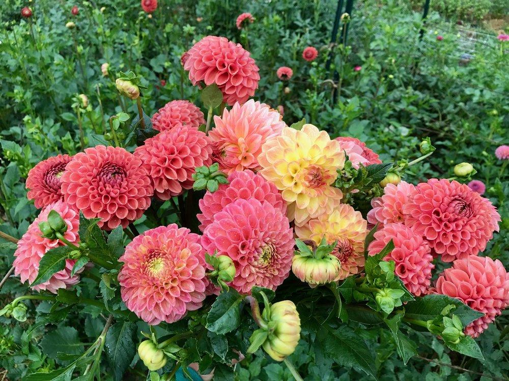 Flowers for Weddings Ashland OR | Petal & Seed