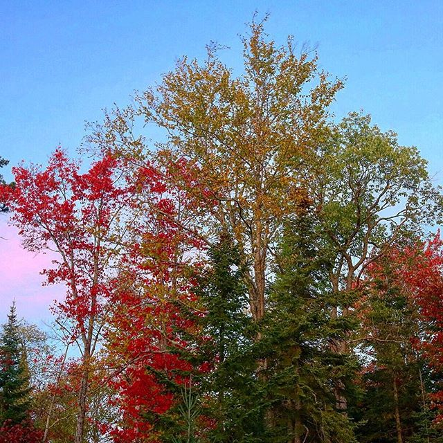 The Adirondacks welcomed us with those rich autumnal colors that only young twilight can so gloriously call forth. It's good to be back, and the temperature is perfect. Celebrate! It's fall, y'all! 🍁🍂 ... ... ... #adirondacks #lakeplacid #fall #autumn #twilight #ontheroad #beautiful #trees #forest #getoutside #natgeopic #nature #itsfallyall #leaves #fallingleaves #breathtaking #sky