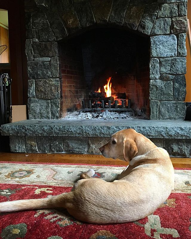 Even Samson can't resist the allure of a warm fire on a chilly morning. After more than two years in North Carolina he's getting back in touch with his Adirondack roots. 🐶 🔥 😊 ... ... ... ... #fall #fireplace #warm #aesthetic #pup #pupstagram #dogsofinstagram #doggo #comfy #cozy #folklife #livefolk #gonorth #adirondacks #adk #lakeplacid #upstateny #travel #travelgram #fallvibes #picoftheday #instapet #pet #petstagram #schoolofhome #roadtrip #lovely