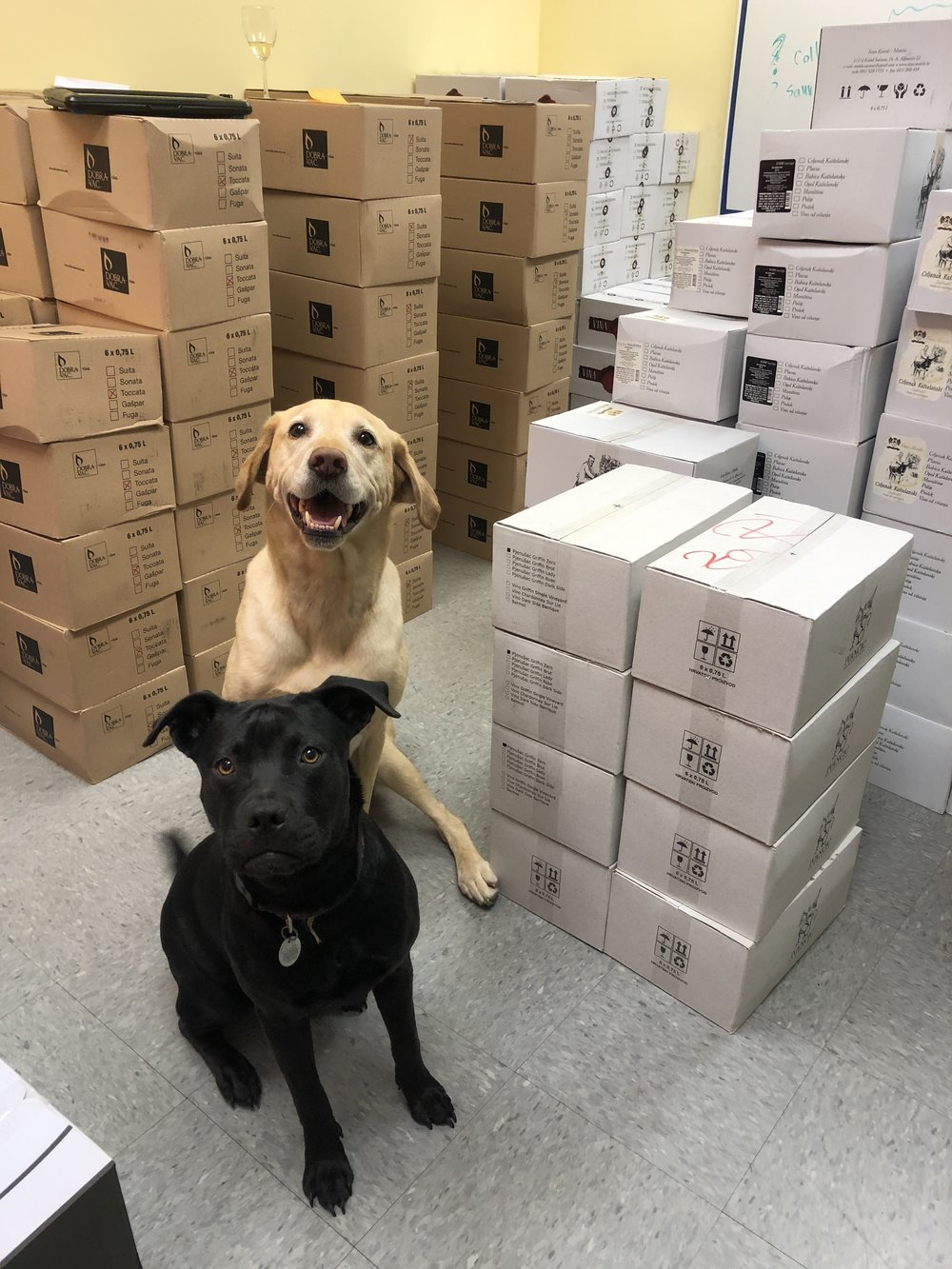 Our crack security team guarding the inventory.