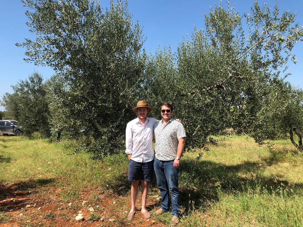Oh, and one of our wedding gifts was an olive tree!