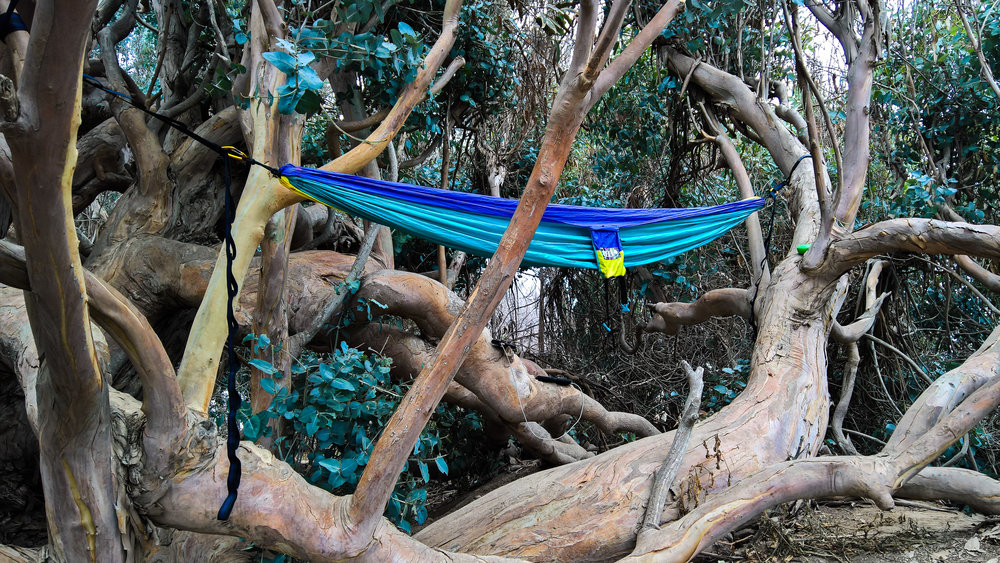 shop bp eagles eno outfitters and hammocks hammock search moosejaw com at nest gear