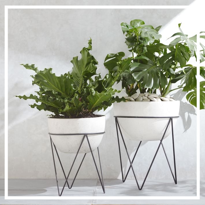 Plants! - Plants are my favourite type of decor and I love having them in every room.