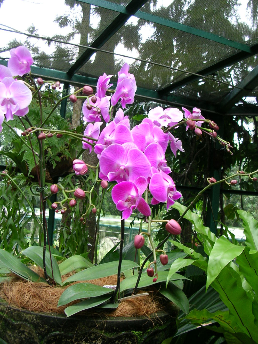 Orchid Gardens, Singapore