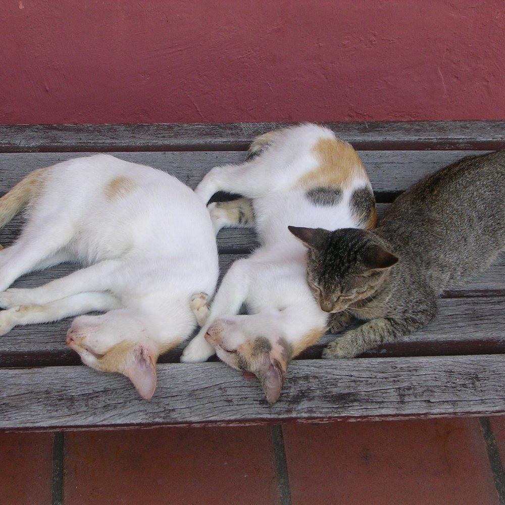 Cats! Melaka, Malaysia by The Doubtful Traveller