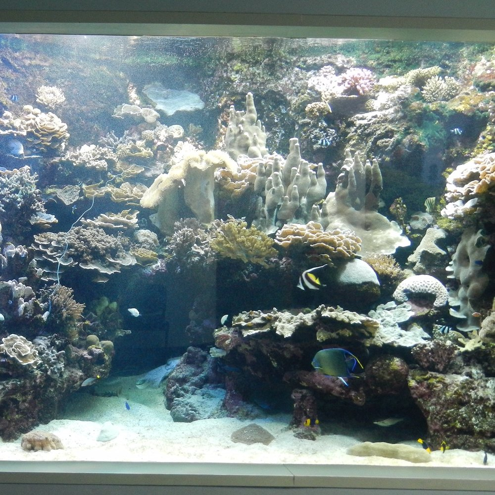 Aquarium des Lagons, Noumea by The Doubtful Traveller