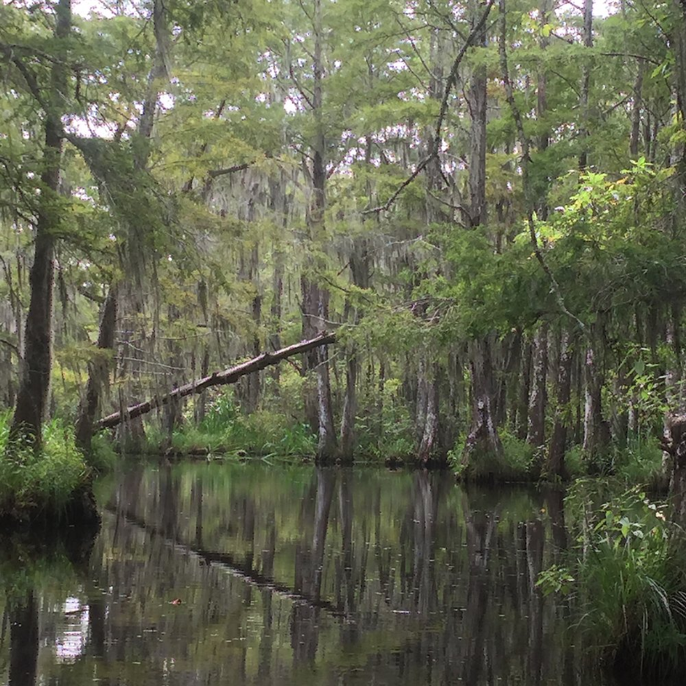 The bayou, New Orleans by Eleanor Currier for The Doubtful Traveller