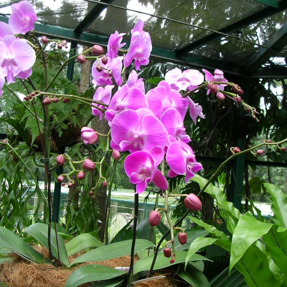 National Orchid Garden, Singapore by The Doubtful Traveller