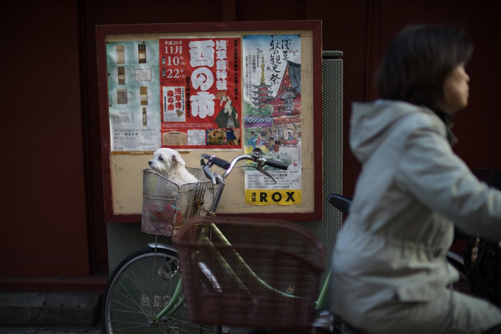 japan2014-3.jpg