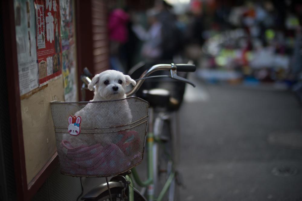 japan2014-6.jpg
