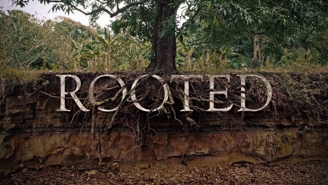 rooted.jpeg