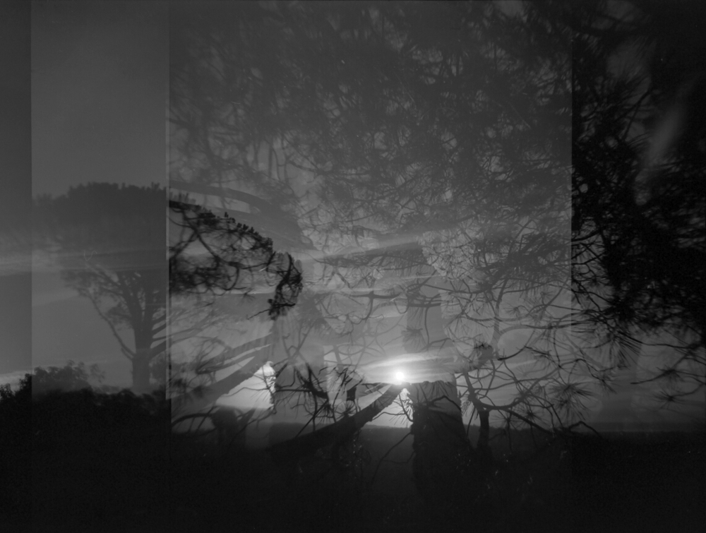 Triple Exposure  |  Magic Tree
