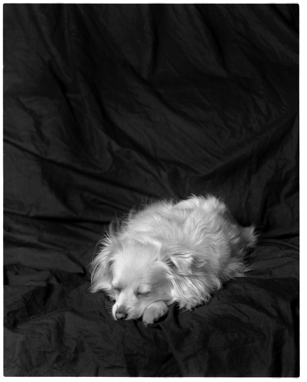 maebyadventure :     Maeby finds being the subject of 4x5 portraiture incredibly boring.