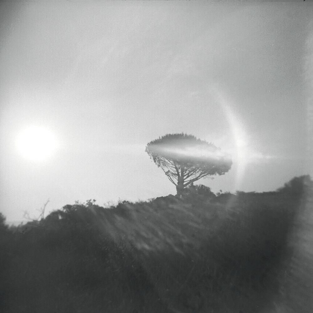 Magic Tree, Burbank Peak, July 2012   Holga, Tri X 400