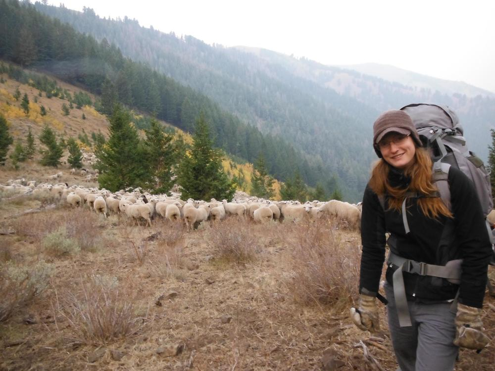 One of our volunteers during the 2012 field season hiking with a full pack and camping with a sheep band.      Photo credit: Defenders of Wildlife/C. Silva