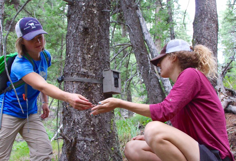 Lauren Hennelly (the author of this post and WRWP's Wolf Biologist) and Phoebe Bean (our Social Media Coordinator and Project Photographer), set up a camera trap in the Project Area. Photo Credit: Andrew Kane of Backcountry Image Photography