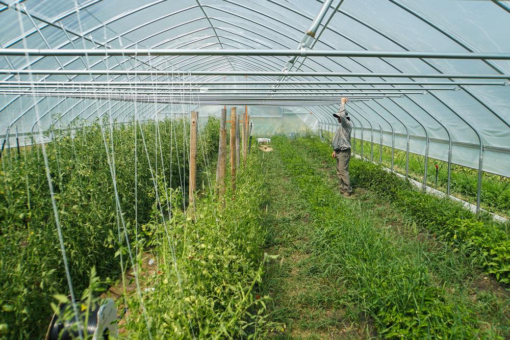 Matt in the greenhouse.