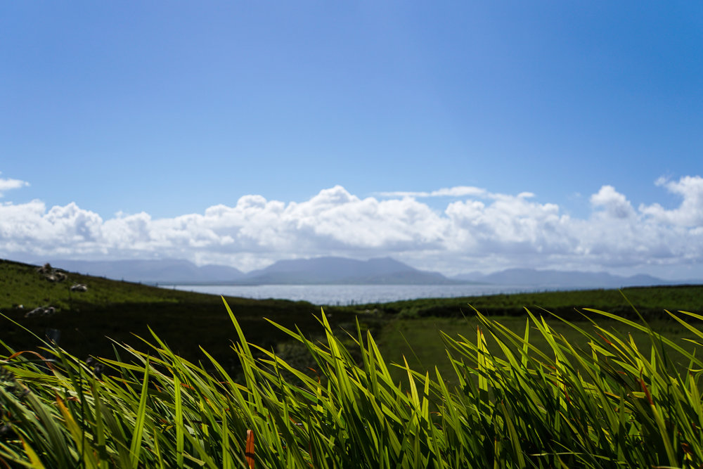 Clare Island green grasses.jpg