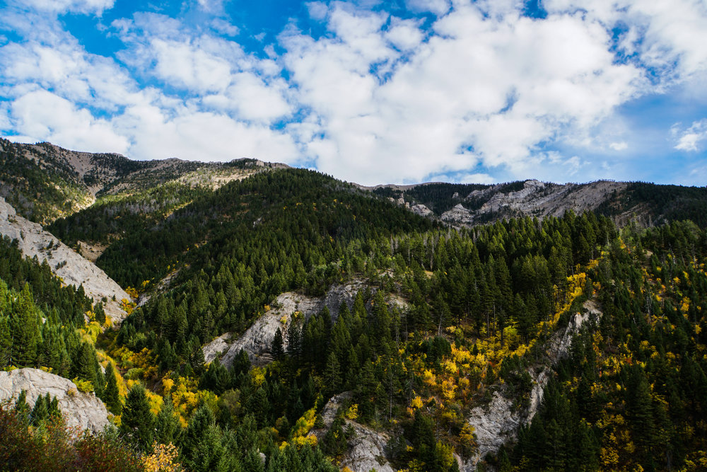 Middle Cottonwood Canyon in the Bridgers