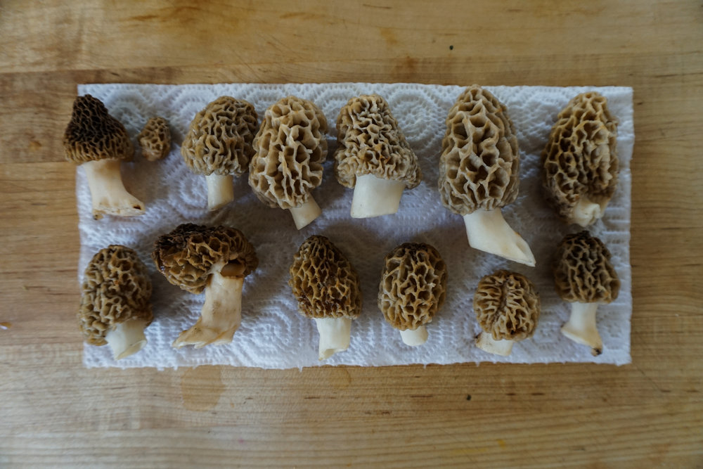 Morel mushrooms are also a beloved wild edible in Montana.