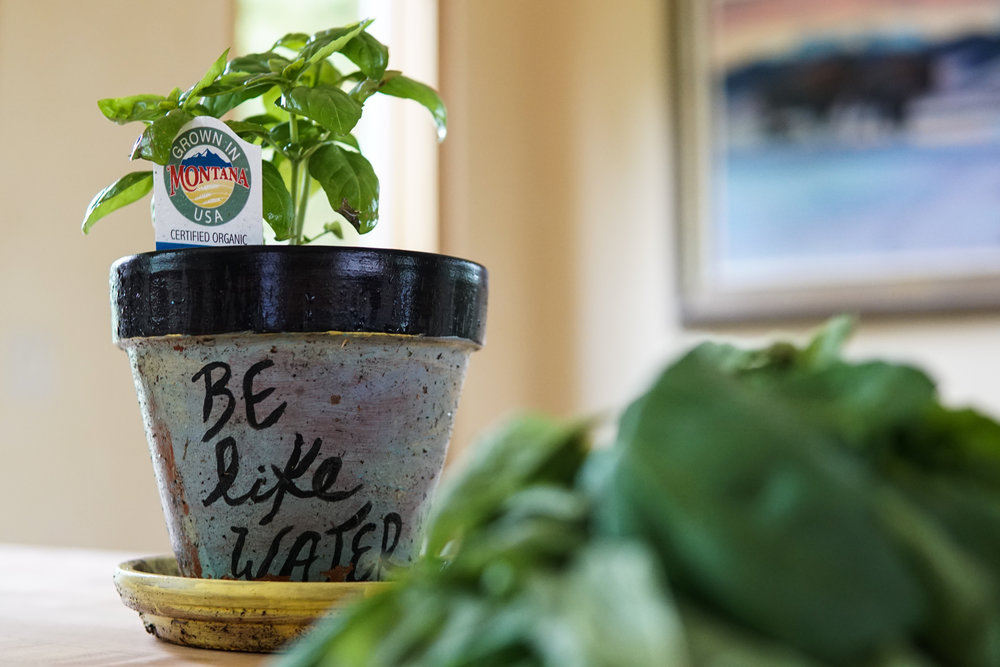 Basil local food delicious easy healthy meals