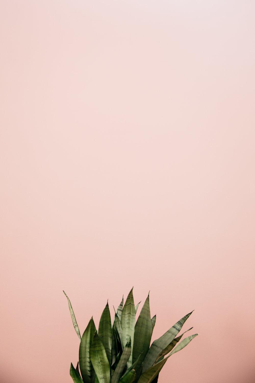 colorado-springs-photography-rental-studio-14.jpg