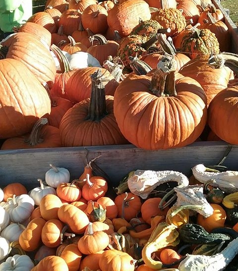 October 14th: Hannibal Central Park Farmers Market - 8am-12p in Hannibal's Central Park