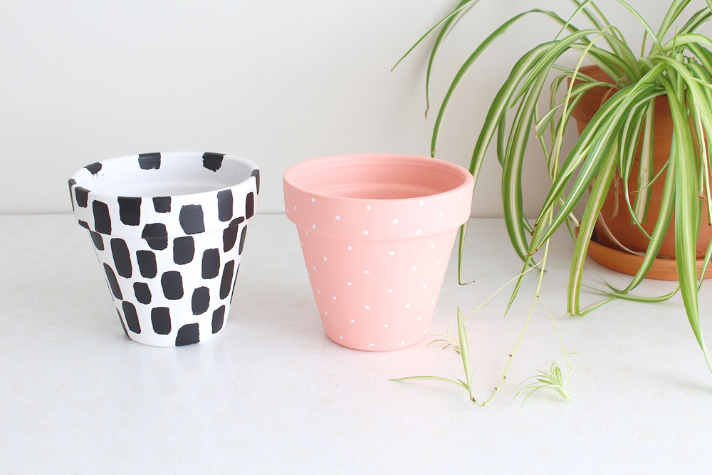 Painted-Plant-Pots-And-Spider-Plant.jpg