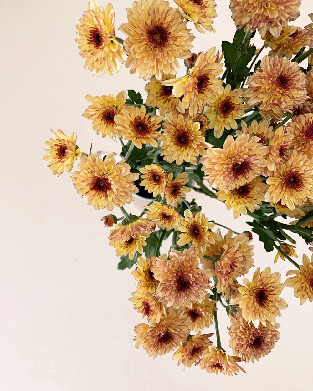 Behind-The-Brand-4-flowers.jpg