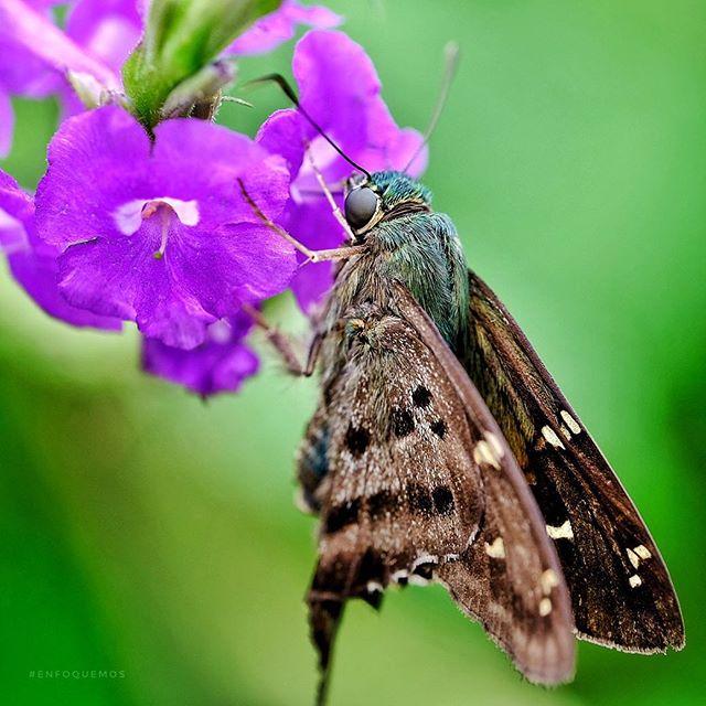 #enfoquemos #butterfly