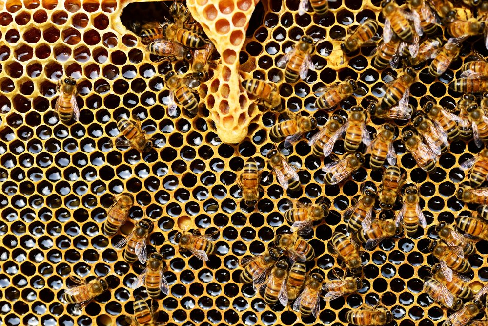 closeup of beehive with bees
