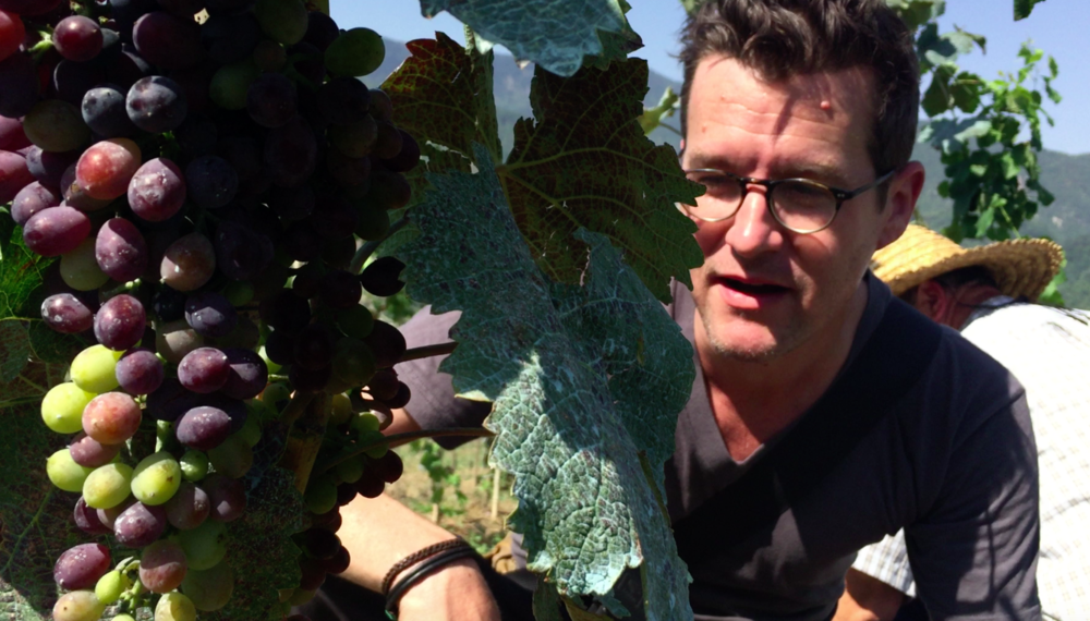 Jeremy Quinn observes Racha grapes as they begin to ripen.