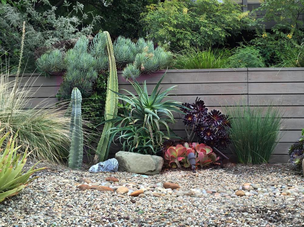 Cactus Cluster.jpg