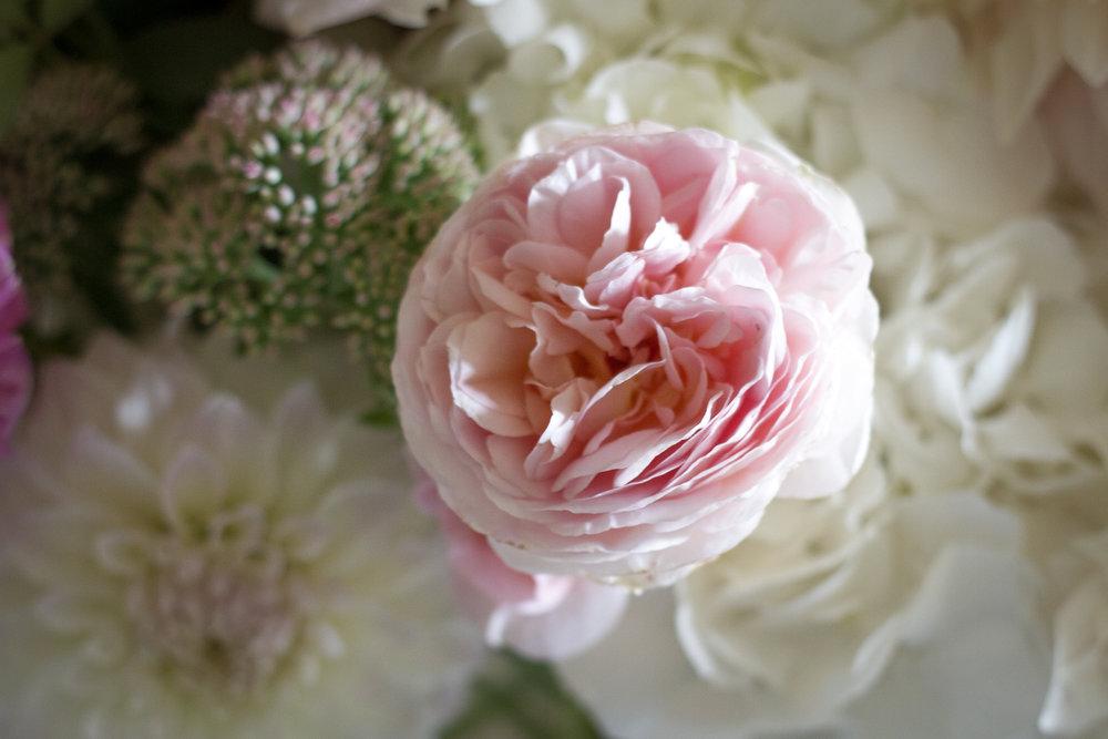 baby_flowers