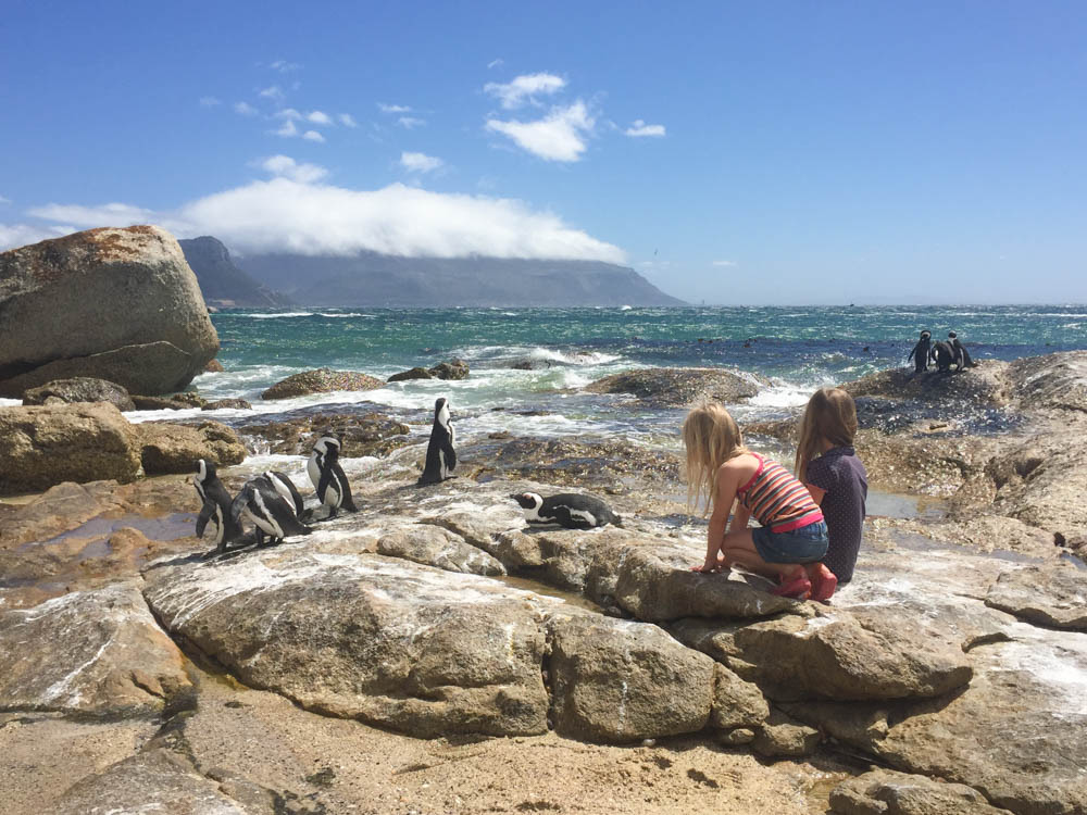 Penguins at Cape Town