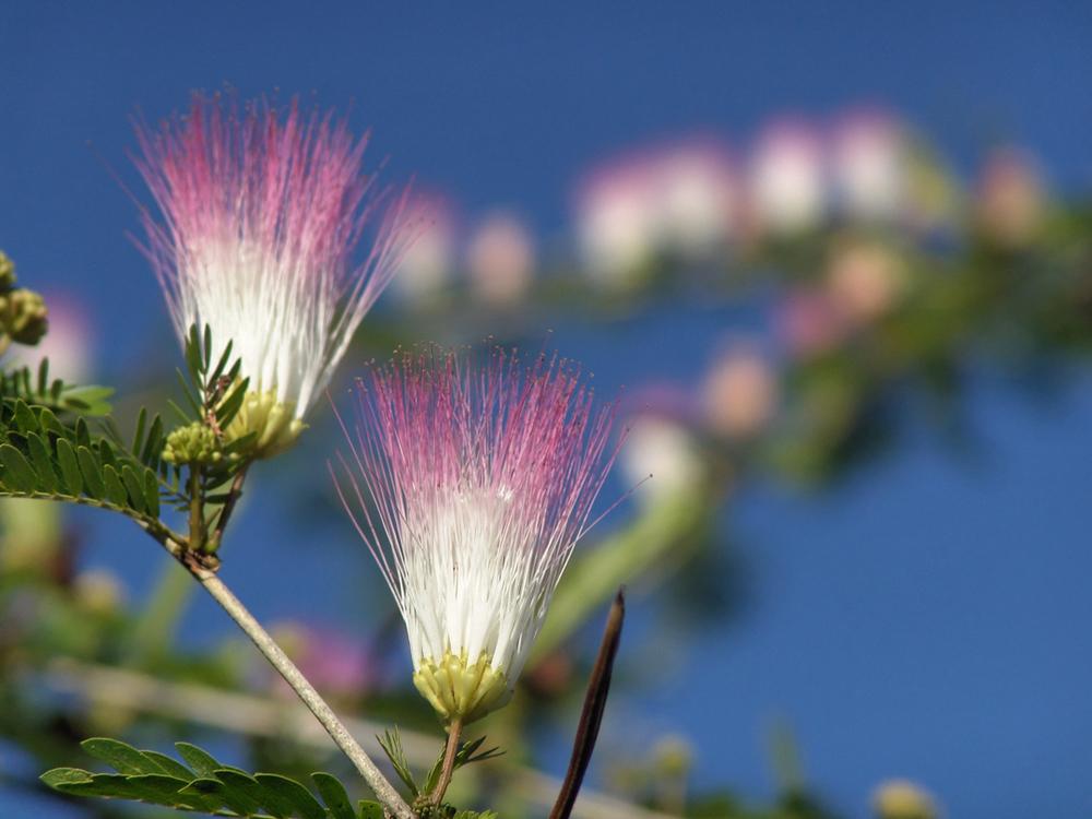 blossom-1029021.jpg