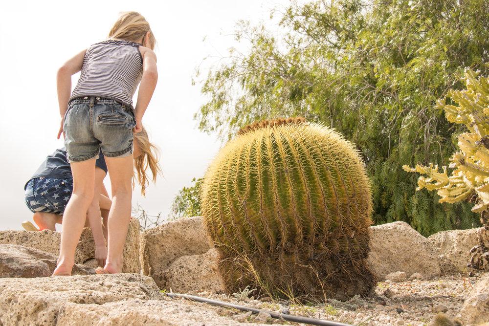Cactus all around