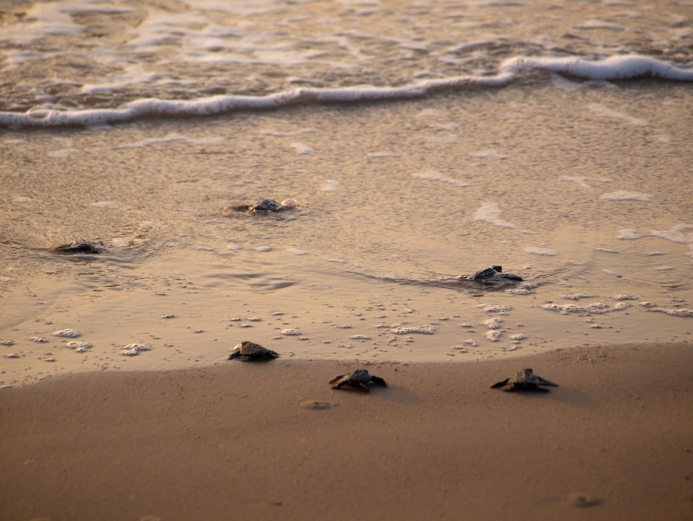 How special: Sea Turtles!
