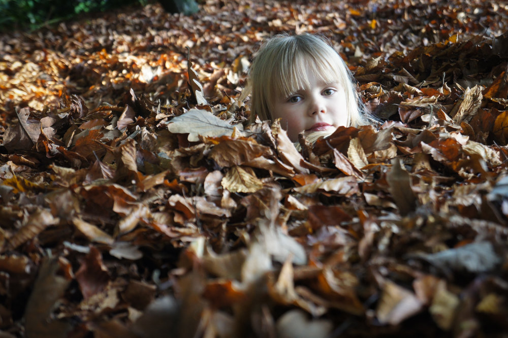 Hide and seek in autumn
