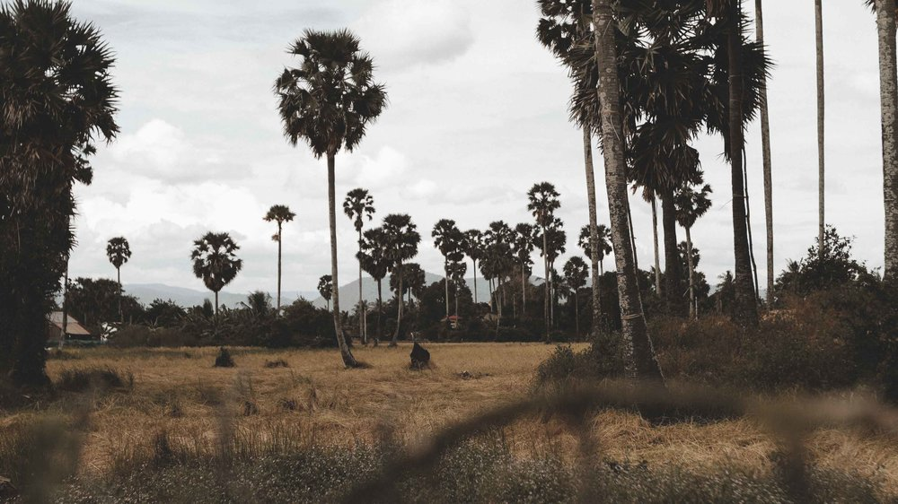 Cambodia 41.jpg