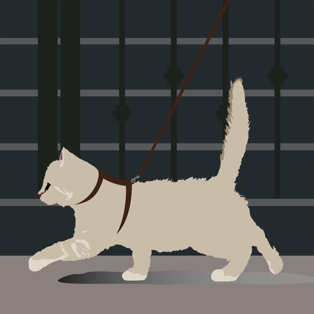 Cat: Odette