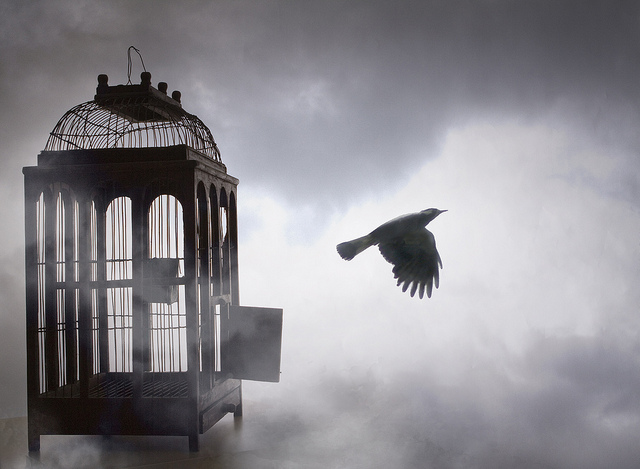 Fugl i bur 3.jpg